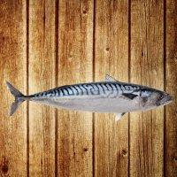купити рыбу оптом